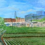 田園風景:開発は進んでいますが、まだこのような風景も横浜に残されています。