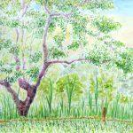 葉桜:地元の自然公園で描きました。いつの間にか、一面の緑です。