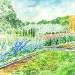 フラワーセンター大船植物園:大船の植物園で描きました。青い花はデルフィニウムで、その奥の花はルピナスです。