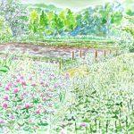シロツメクサとアカツメクサ:地元の自然公園で描きました。一面が野草に覆われていましたね。