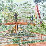 鯉よ来い:横浜の三渓園で描きました。橋の上からは、鯉に餌をやっている人がいました。
