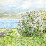 八景島のアジサイ:八景島で描きました。遠くにはウインドサーフィンをする人が見えました。