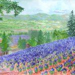 ファーム富田のラベンダー:富良野のラベンダー畑です。花は綺麗でしたが、観光客が多かったですね。