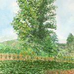 ポプラの木:美瑛のライダーハウスの裏手にある、大きなポプラの木です。
