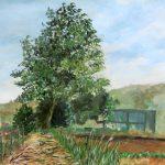 クヌギの木:地元のハイキングコースで描きました。ここには丘の上に一本、大きなクヌギの木があります。