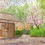 満開の梅の下で:地元の自然公園で描きました。3月の中旬だったので梅はもう終わりと思っていたのですが、綺麗に咲いていました。
