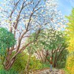 散歩道のハクモクレン:地元のハイキングコースで描きました。大きなハクモクレンの花が咲いていましたよ。