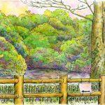 静かな池:北鎌倉の「散在ガ池森林公園」で描きました。池の周りは散策路になっています。