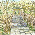 冬の明月院:北鎌倉の明月院です。ここはアジサイが有名ですが、冬は枯れていましたね。