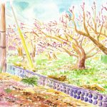 曽我梅林:小田原の曽我梅林です。白い梅を透明水彩で描くのは難しかったので、むりやり紅梅に。
