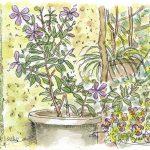 ツルニチニチソウ:セツの庭で。