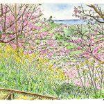 ひと足お先に:3月上旬に神奈川の山の中にある庭園で描いたスケッチです。 本格的な春の到来の前に、ここでは早咲きの河津桜と菜の花が見頃を迎えていました。