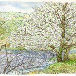 川沿いに立つ: 御殿場線の谷峨(やが)駅付近で描きました。川沿いに大島桜が立っていて、白い花と緑の新芽がとても爽やかでしたよ。