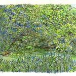 深い茂み:地元の自然公園で描きました。農業用の溜め池のほとりです。