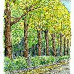 海辺のイチョウ並木:山下公園前のイチョウ並木。このときは黄色と緑の葉が混在。