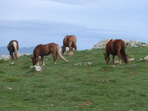 馬が放牧されていた