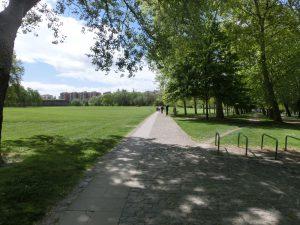 公園の中も巡礼路の一部