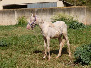 やせっぽちの馬