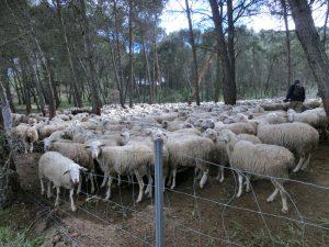 柵の中の羊たち