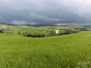 一面の麦畑