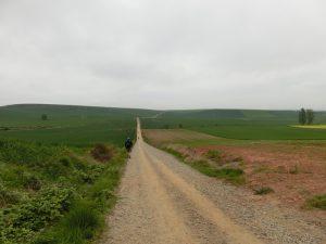 麦畑の中の道
