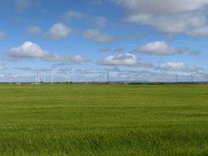 麦畑の向こうには風車がずらり