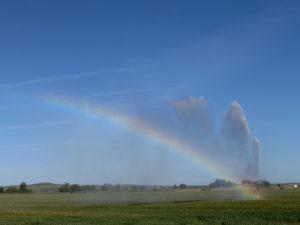 スプリンクラーが虹を作っていた