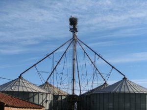 工場のコウノトリの巣