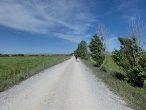 一面の麦畑の中を歩く