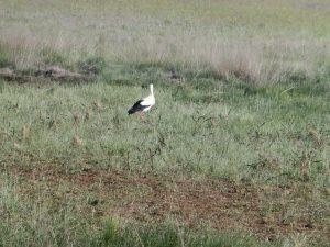 湿地帯にいた鳥
