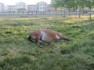 やる気のない馬