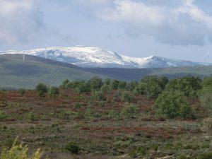 雪をかぶった山