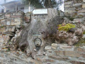 壁と一体になった木