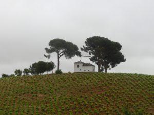 ブドウ畑の中の一軒屋