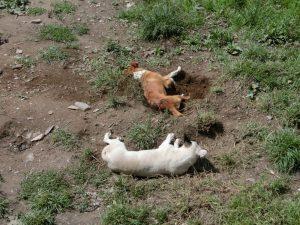 穴掘って埋まってます