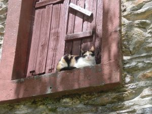 窓のさんに寝転ぶ猫