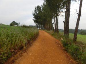赤土の道を歩く