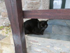 黒猫はみんな目つきが悪い