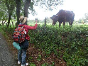 牛の写真を取る江川さん
