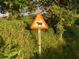 牛に注意の看板