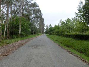 左手には大きなユーカリの木々