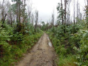 立ち枯れた木々