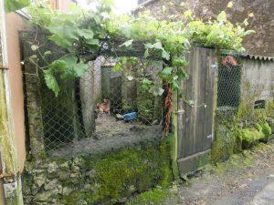 とある民家の庭