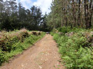 松林の中を抜ける