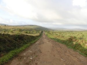 草原の中の一本道