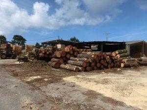 材木置き場の横を通る