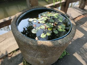 鉢の中では金魚が泳いでいた