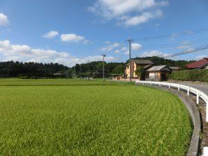 田んぼの中の道を歩く