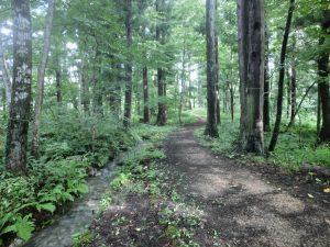 木々の間の道を歩く