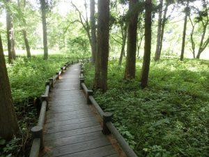 木の道伝いに歩く